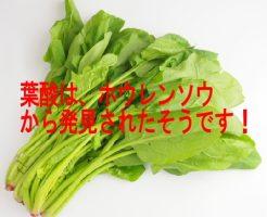 ほうれん草には妊婦・妊娠初期・中期・後期に必要な葉酸が豊富!
