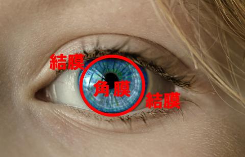 角膜と結膜(角膜炎・結膜炎・はやり目・流行性角結膜炎)