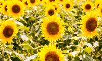 夏熱中症対策熱中症予防